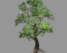 Hundred Forests-Plants-Elm 04 3D model