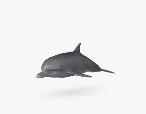Common Bottlenose Dolphin HD 3D
