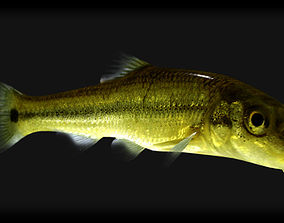 Sucker Minnow 3D model
