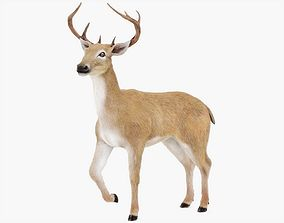 Deer Rigged with Fur 3D model