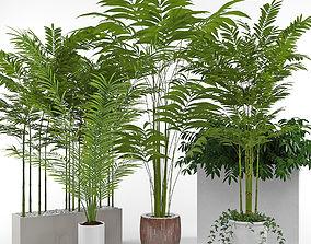 House plant 3 3D model palm
