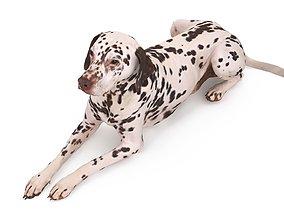 3D model Dalmatian Lying Dog