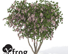 3D model XfrogPlants Crape Myrtle