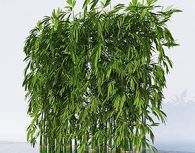 Dense Bamboo Against Wall botanical 3D