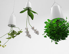 3D Plants in upside down hanging pots