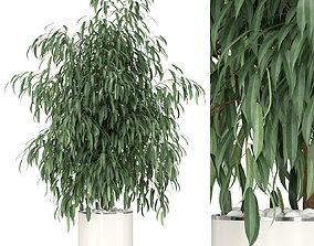 3D model Plants collection 346