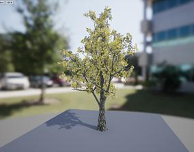 Autumn Birch tree 3D model VR / AR ready