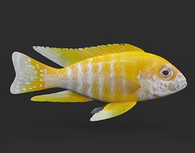 Cichlid Fish 3D