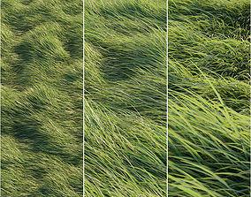 3D model plant Long grass