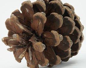 Realistic - Pine Cone 3D model