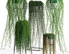 Houseplant 50 3D