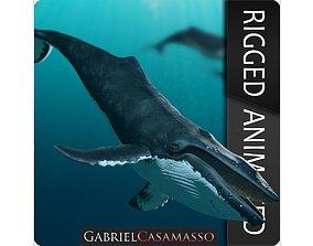 3D model Humpback Whale - Megaptera Novaeangliae