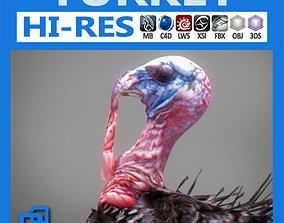 Turkey christmas 3D model