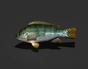 Green Sunfish 3D asset
