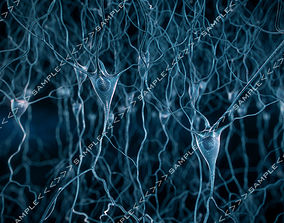 3D Pyramidal-Neurons-scene