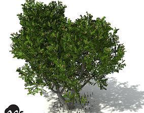 XfrogPlants Grey Mangrove 3D