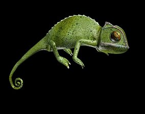 Chameleon walk rigged animated 3D asset game-ready