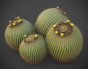 XfrogPlants Golden Ball- Echinocactus Grusonii 3D