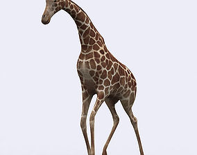 animated realtime 3DRT - Giraffe