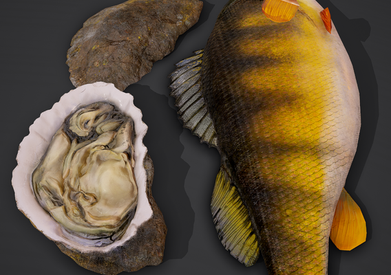 oyster and perch