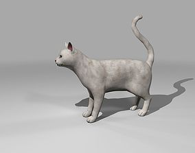 3D asset White Cat Rigged