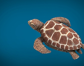 3D asset game-ready TURTLE
