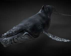 Humpback Whale C4D Rigged 3D model