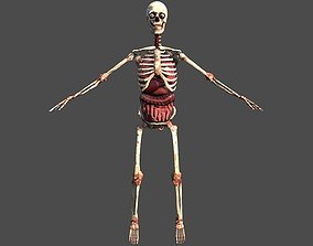 3D model Skeletton with organs