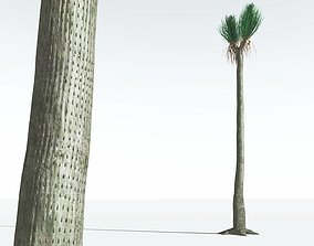 EVERYPlant Ovate Sigillaria 04 --18 Models--