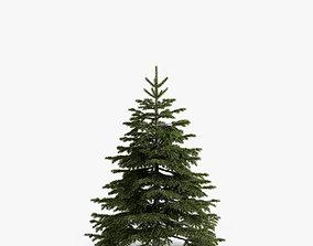fir-tree 02 3D