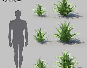 3D Cinnamon Fern With Animation