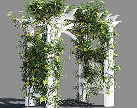 Hibbertia scandens gate 3D model