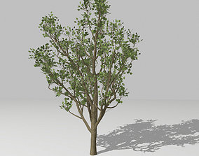 Middle size tree 3D model