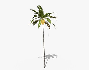 3D asset Coconut Palm Tree 5287