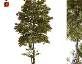 3D model tree 035
