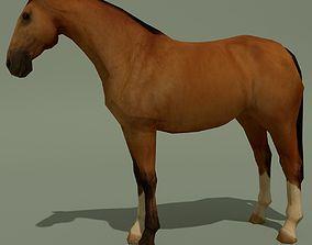 LowPoly Horse A Buckskin 3D asset