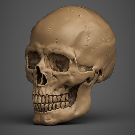 human skull blender sculpting model