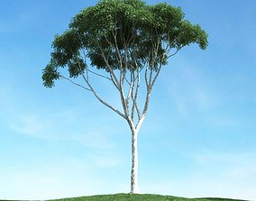 3D model Tall Leaf Tree