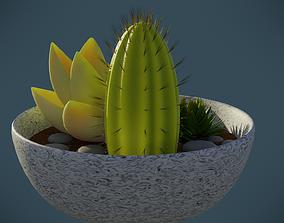 Succulent Bowl 3D asset