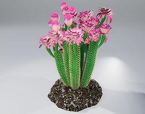 3D model Cactus GGF