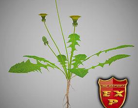 Taraxacum officinale dandelion 3D model