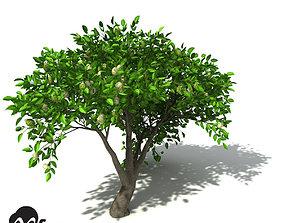 XfrogPlants Noni 3D