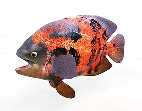 Oscar Fish Rigged 3D asset