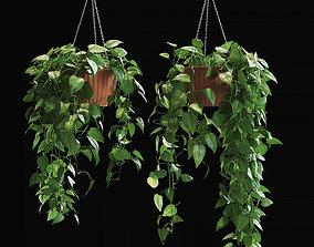 3D model Scandens plant 4