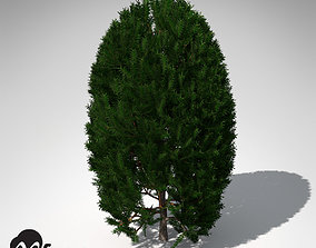 3D XfrogPlants English Yew