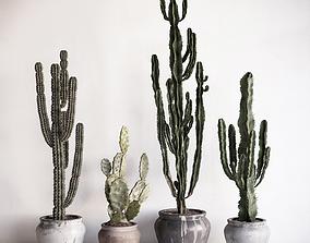 Cactuses 3D model