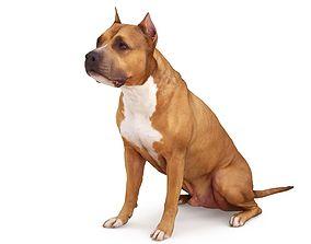 3D model Staffordshire Terrier Dog