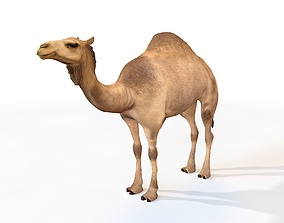 3D model Camel Rigged