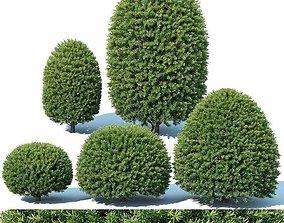 Taxus Baccata Nr5 - topiary set 1 3D model