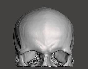 Human skull - male 3D model